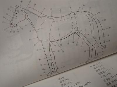 0608馬教材.jpg